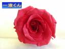 一液くんで作成したバラ乾燥済み